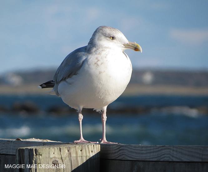 Blog-Seagull1
