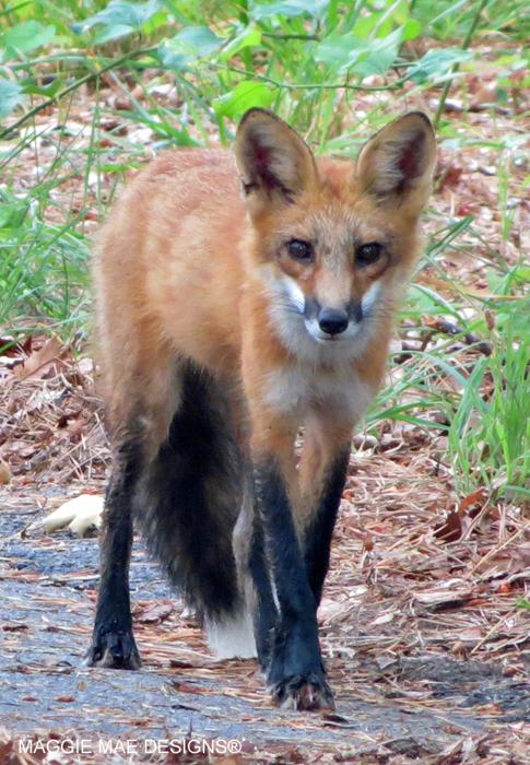 Blog-Fox-O-Hill9
