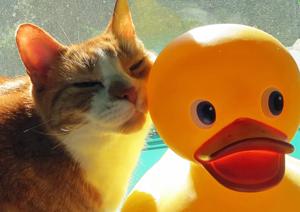 Feelin' Duckie